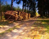 Cutted drewno w lesie Fotografia Royalty Free