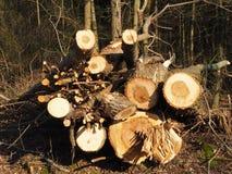 Cutted drzewa dla usunięcia dla łupki obraz stock