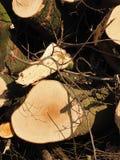 Cutted drzewa dla usunięcia dla łupki zdjęcie royalty free