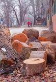 Cutted drzewni bagażniki na przejściu fotografia stock