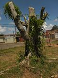 Cutted drzewny bagażnik fotografia royalty free