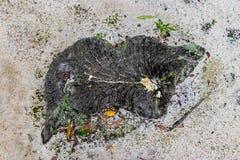 Cutted Drzewny Patrzeć Jak wyspa od Above Obraz Royalty Free