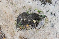 Cutted Drzewny Patrzeć Jak wyspa od Above Fotografia Royalty Free