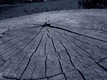 Cutted drzewo zdjęcia royalty free