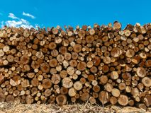 Eucalyptus firewood trunk tree piled up texture - pattern stacked fire wood stock images