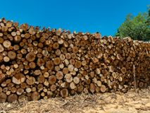Eucalyptus firewood trunk tree piled up texture - pattern stacked fire wood royalty free stock photos