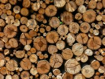 Eucalyptus firewood trunk tree piled up texture - pattern stacked fire wood royalty free stock photo