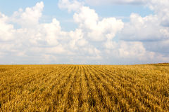 Cutted Farmers field Royalty Free Stock Photo