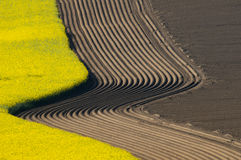 Curved Furrowsin spring, ploughed fields. Ploughed furrows of an asparagus field beside a field and an other prepared field in curved lines in spring stock images
