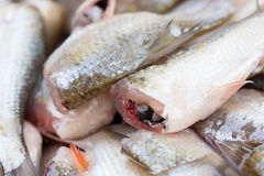 Cutted head fish for cooking. Royalty Free Stock Photo