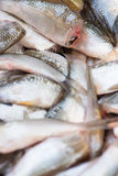 Cutted head fish for cooking. Royalty Free Stock Images