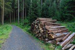 Cutted houten die stapel naast de weg in bos wordt gestapeld Royalty-vrije Stock Foto's