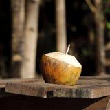 Cutted kokosnöt med att dricka röret Royaltyfri Fotografi