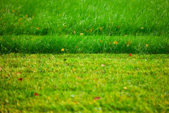 Cutted lawn Royalty Free Stock Photos