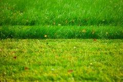 Cutted lawn royaltyfria foton