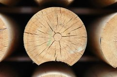 Cutted log. Close-up of  log cutted with saw Royalty Free Stock Photography