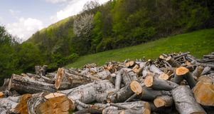Cutted logs Stock Photo