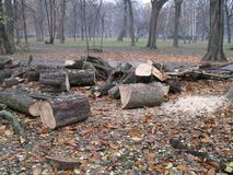 Cutted logs from park in autumn. Autumn mood background. Cutted logs from park stock photography