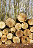 Cutted lumber Stock Image