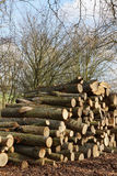 Cutted lumber Royalty Free Stock Image