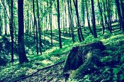 Cutted träd i skogen arkivfoto
