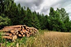 Cutted trädjournaler som lagras bredvid ett skog- och kornfält Royaltyfri Fotografi