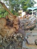 Cutted tree. In Malappuram Kerala India stock photos