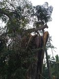 Cutted tree. In Malappuram Kerala India royalty free stock image