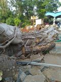 Cutted tree. In Malappuram Kerala India royalty free stock photography