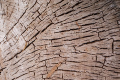Cutted tree trunk Royalty Free Stock Photos