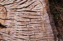 Cutted tree trunk Stock Photo