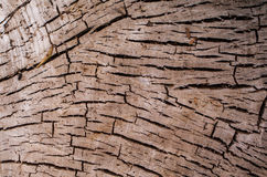 Cutted tree trunk Royalty Free Stock Images