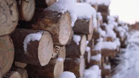 Cutted trees covered in snow huddle with numbers markers at sawmill. On windy cloudy day stock video
