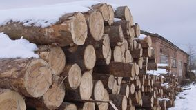 Cutted trees covered in snow huddle with numbers markers at woodworks facility. On windy cloudy day stock video footage