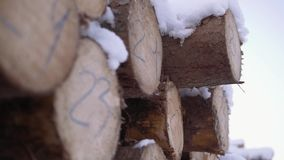 Cutted trees covered in snow pile with numbers markers at sawmill. On windy cloudy day stock footage