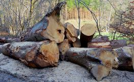 Cutted trees Stock Photo
