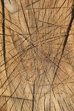 Cutted trunk Royalty Free Stock Photos