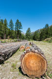 Cutted trunks and barks in a mountain landscape Royalty Free Stock Photo