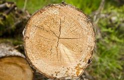 Cutted unten Baum Lizenzfreies Stockbild