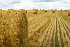 Field with sheaves of hay. Harvest. Cutted wheat. Gold field with cloudy sky Stock Images
