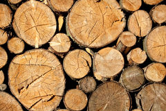 Cutted wood Royalty Free Stock Photography