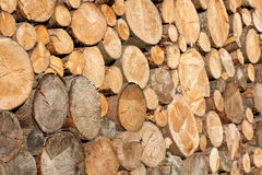 Cutted wood Stock Photography