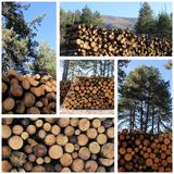 Cutted wood Royalty Free Stock Image