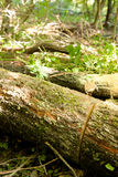 Cutted wood in forest Stock Image