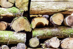 Cutted wood in the French countryside Stock Image