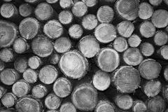 Cutted wood in monochrome Royalty Free Stock Image