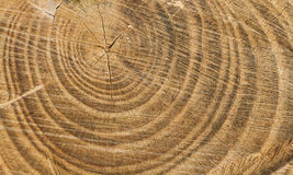 Cutted Wood Texture Royalty Free Stock Photo