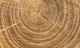 Cutted Wood Texture Royalty Free Stock Photos