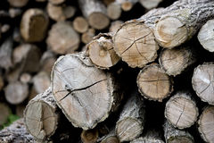 Cutted wood for winter Stock Photo