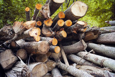Cutted woods. color image Stock Photo